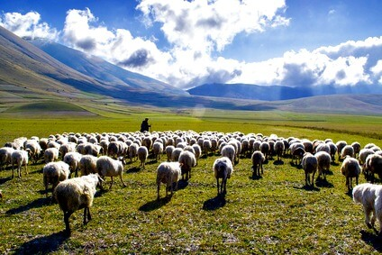 Shepherd in the Scottish Highlands